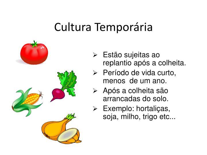 Cultura Temporária