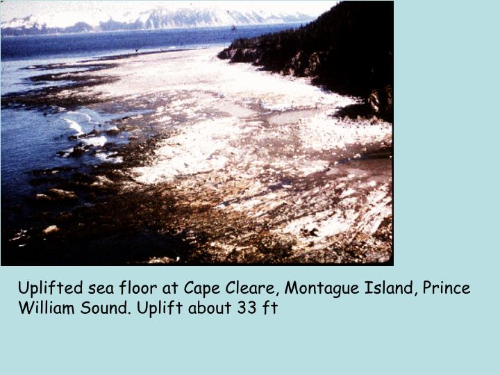 Uplifted sea floor at Cape Cleare, Montague Island, Prince William Sound. Uplift about 33 ft