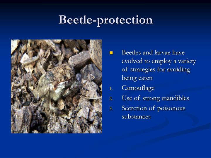 Beetle-protection