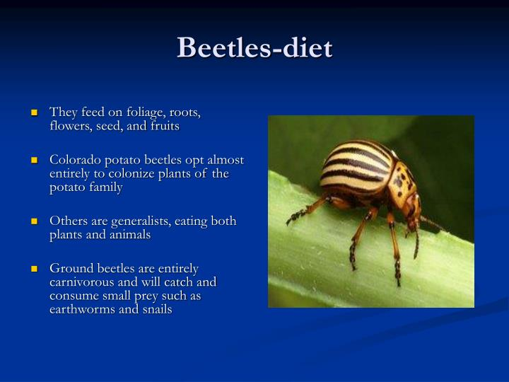 Beetles-diet