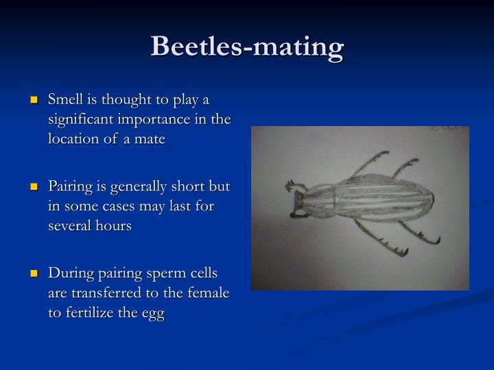 Beetles-mating