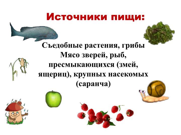 Источники пищи: