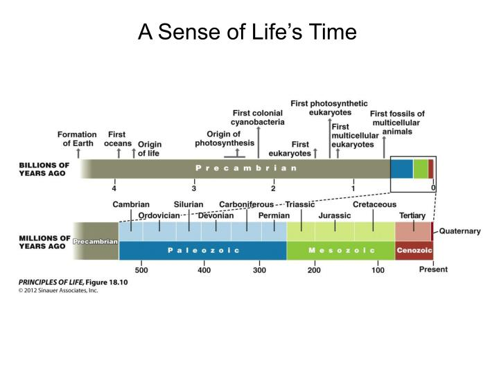 A Sense of Life's Time