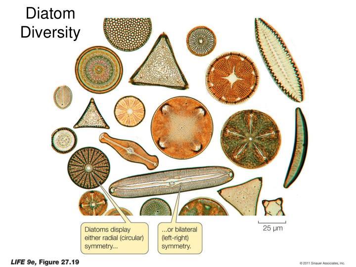 Diatom Diversity