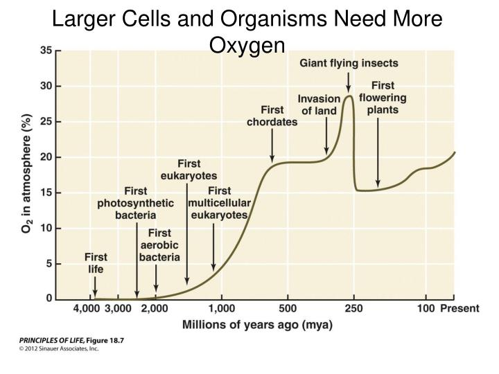 Larger Cells and Organisms Need More Oxygen