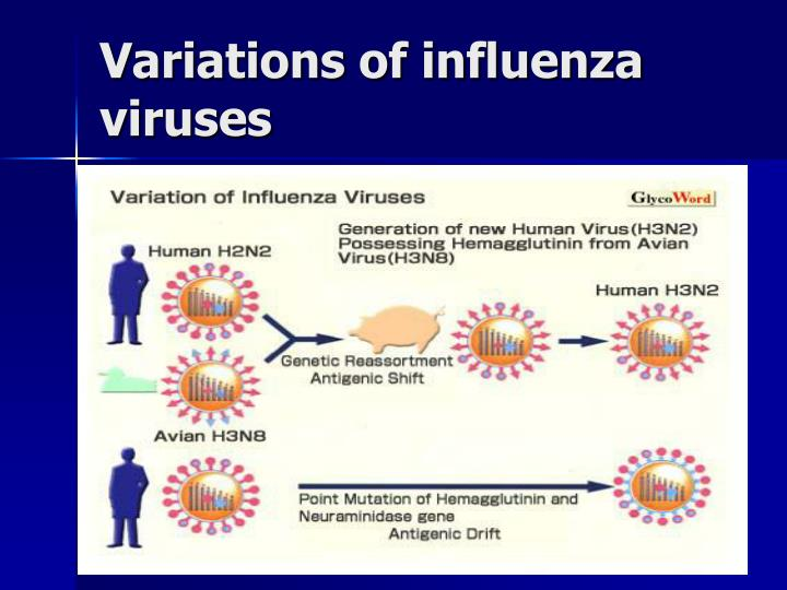 Variations of influenza viruses