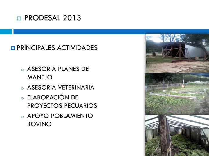 PRODESAL 2013