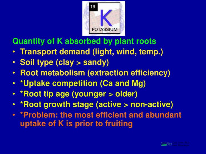 Quantity of K absorbed by plant roots