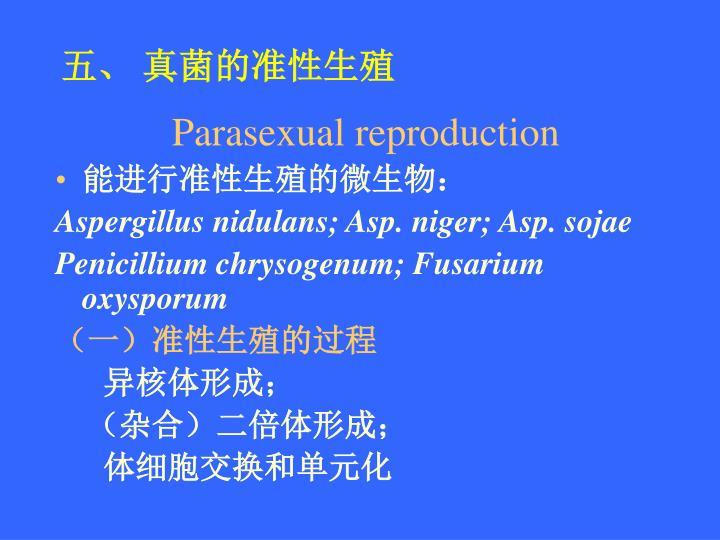 五、 真菌的准性生殖