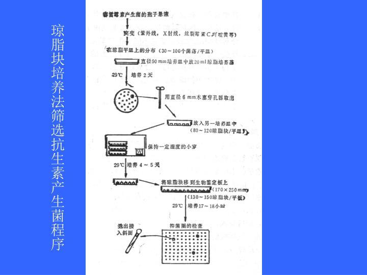 琼脂块培养法筛选抗生素产生菌程序