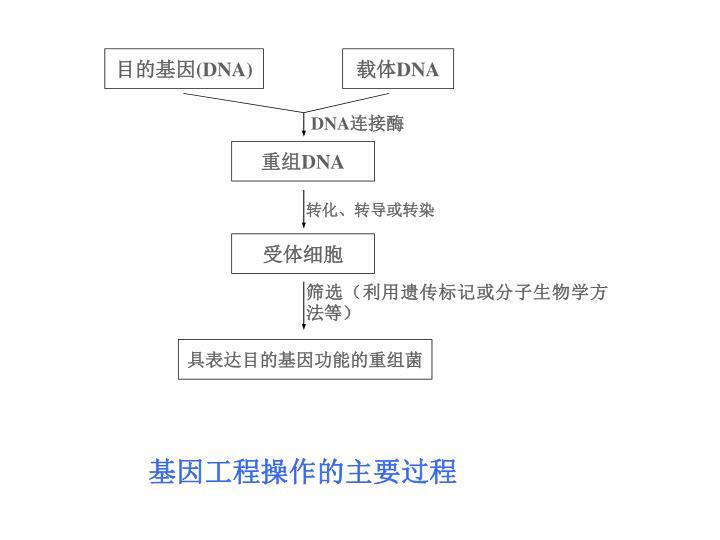 基因工程操作的主要过程
