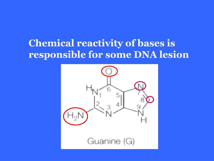 Chemical reactivity of bases is responsible for some DNA lesion