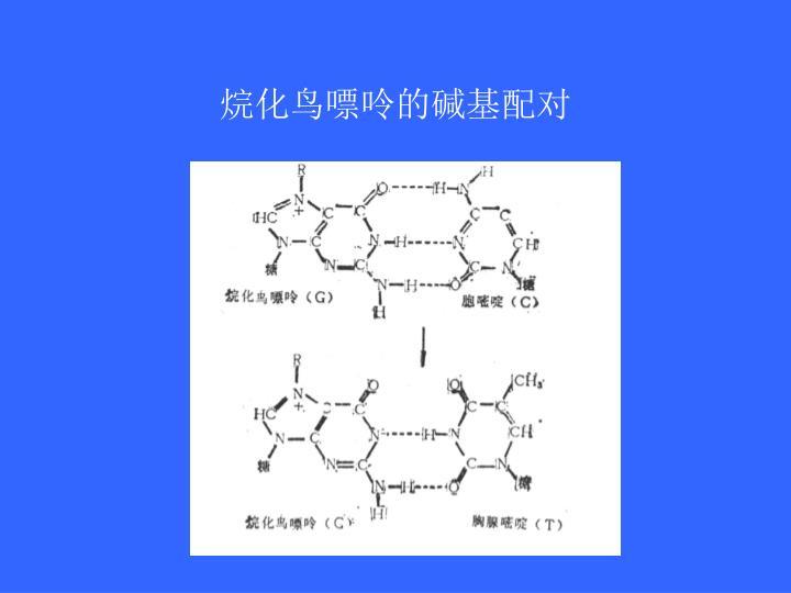 烷化鸟嘌呤的碱基配对