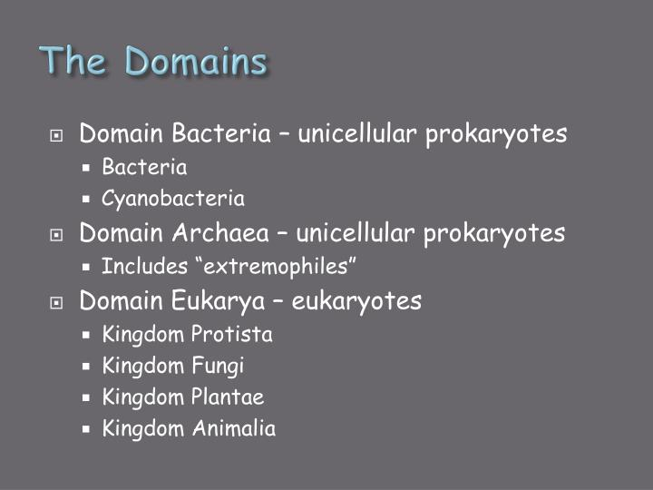 The Domains