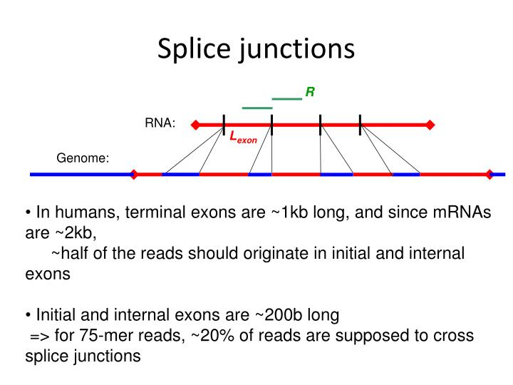 Splice junctions