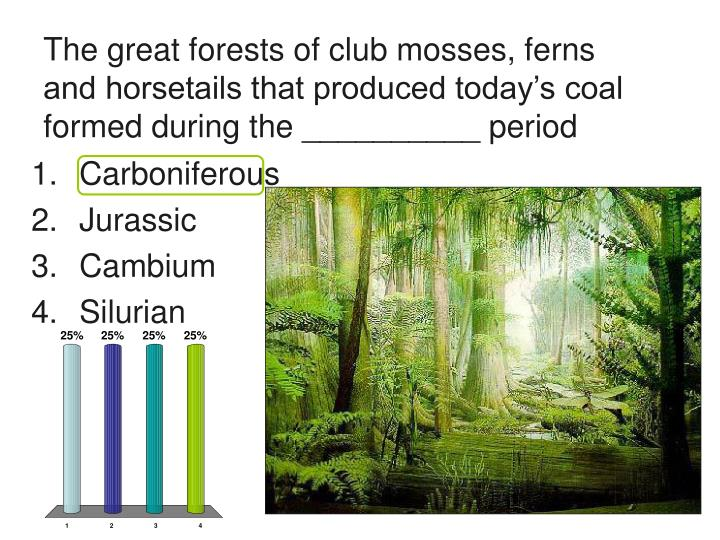 The great forests of club mosses, ferns and horsetails that produced today's coal formed during th...