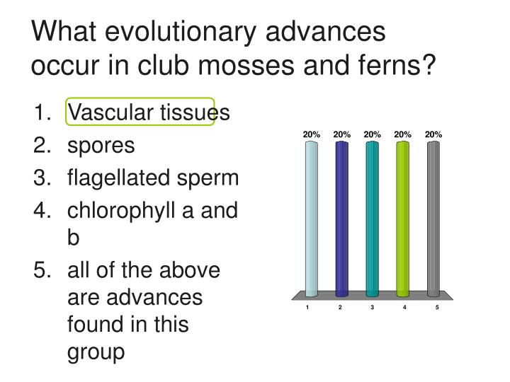 What evolutionary advances occur in club mosses and ferns?