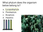 what phylum does the organism below belong to