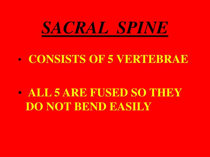 SACRAL  SPINE