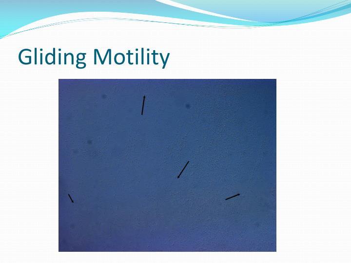 Gliding Motility