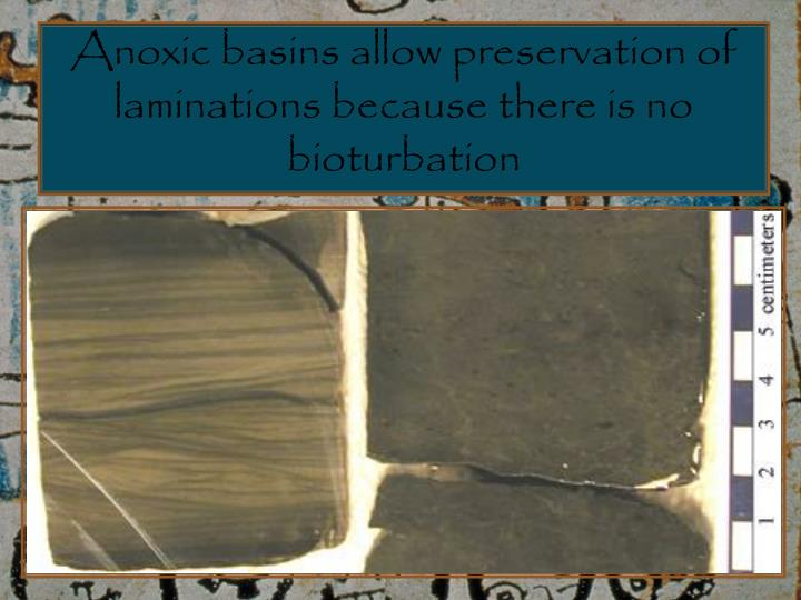 Anoxic basins allow preservation of laminations because there is no bioturbation