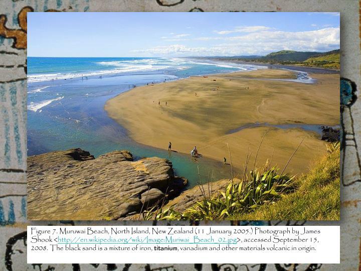 Figure 7. Muruwai Beach, North Island, New Zealand (11 January 2005.) Photograph by James Shook <