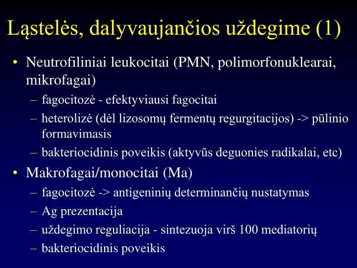 Ląstelės, dalyvaujančios uždegime (1)