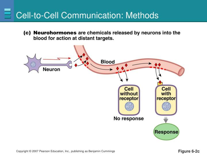 Cell-to-Cell Communication: Methods