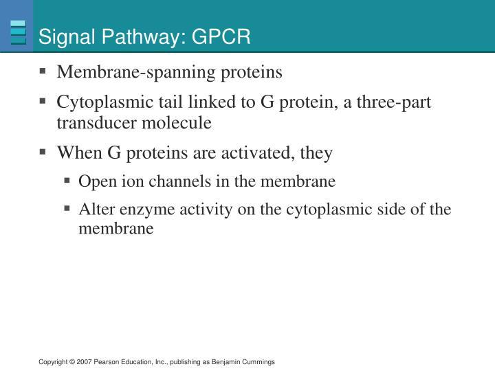 Signal Pathway: GPCR