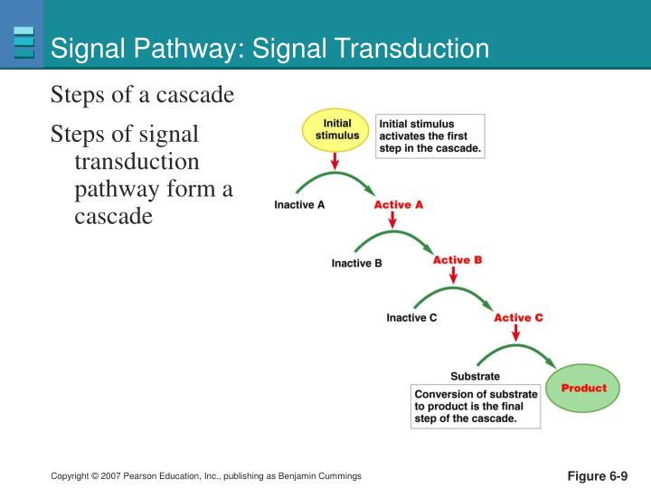 Signal Pathway: Signal Transduction