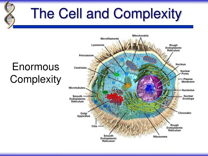The Cell and Complexity