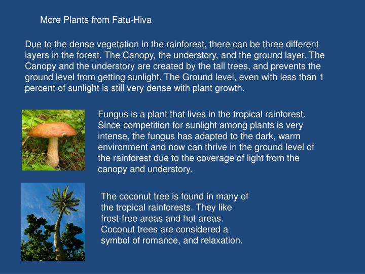 More Plants from Fatu-Hiva