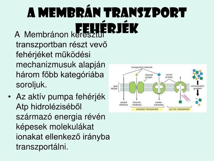 A membrn transzport fehrjk