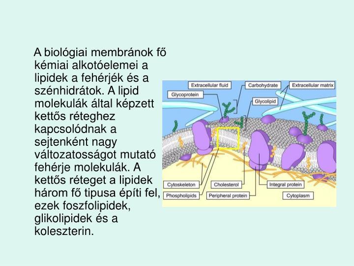 A biolgiai membrnok f kmiai alkotelemei a lipidek a fehrjk s a sznhidrtok. A lipid molekulk ltal kpzett ketts rteghez kapcsoldnak a sejtenknt nagy vltozatossgot mutat fehrje molekulk. A ketts rteget a lipidek hrom f tipusa pti fel, ezek foszfolipidek, glikolipidek s a koleszterin.