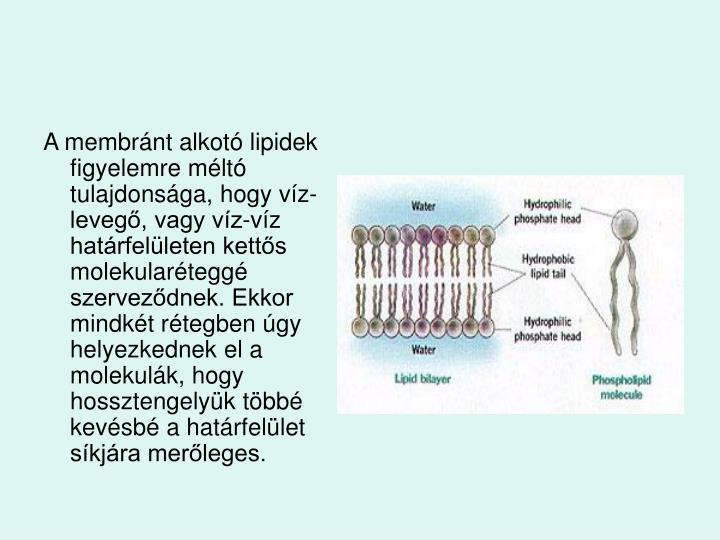A membrnt alkot lipidek figyelemre mlt tulajdonsga, hogy vz-leveg, vagy vz-vz hatrfelleten ketts molekulartegg szervezdnek. Ekkor mindkt rtegben gy helyezkednek el a molekulk, hogy hossztengelyk tbb kevsb a hatrfellet skjra merleges.