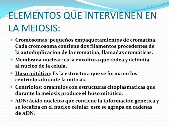 ELEMENTOS QUE INTERVIENEN EN LA MEIOSIS: