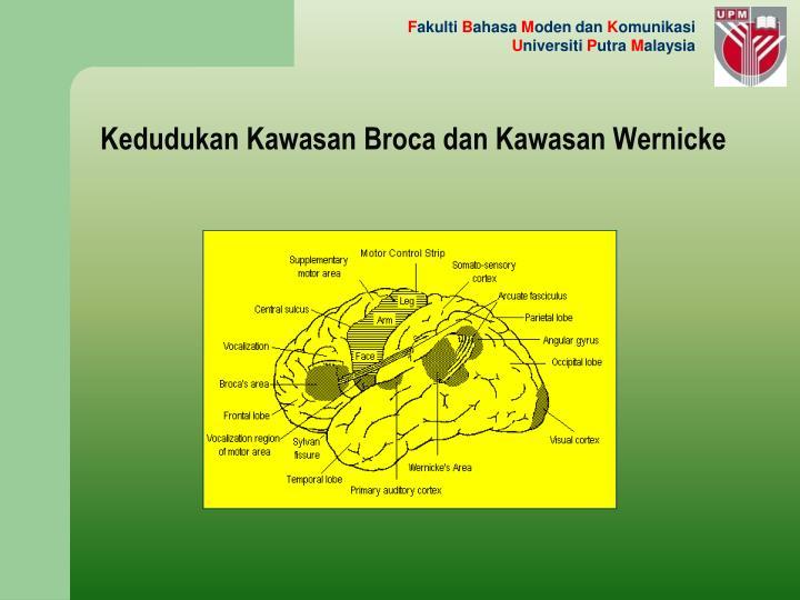 Kedudukan Kawasan Broca dan Kawasan Wernicke