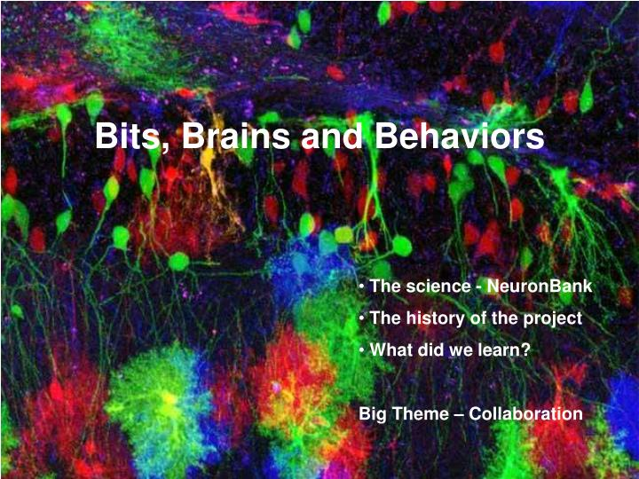 Bits brains and behaviors