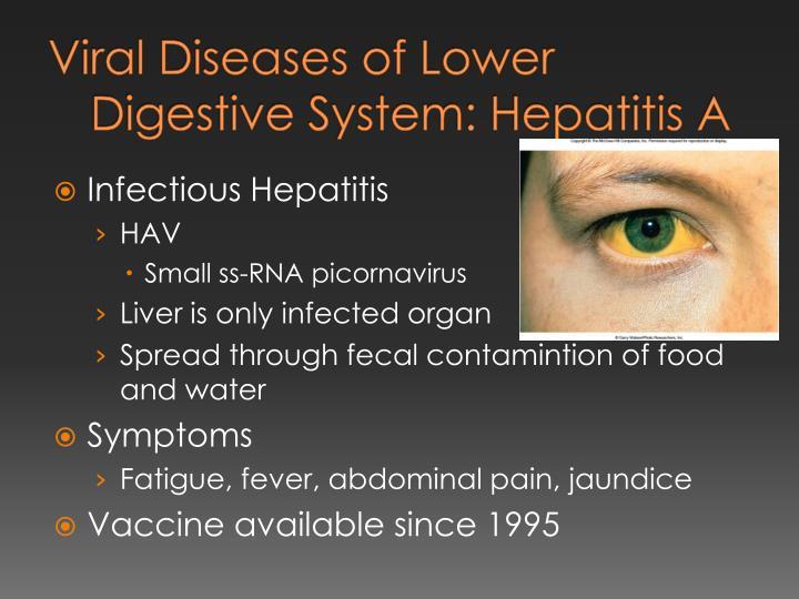 Viral Diseases of Lower Digestive System: Hepatitis A