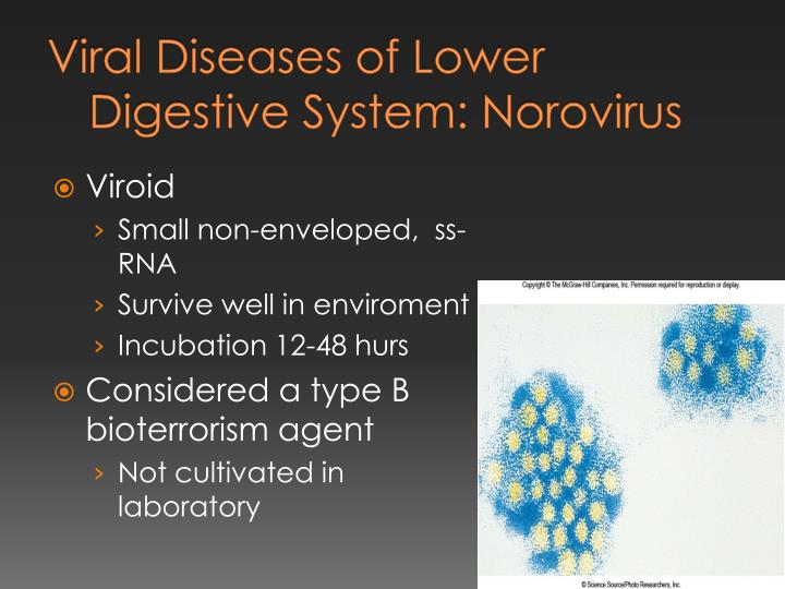 Viral Diseases of Lower Digestive System:
