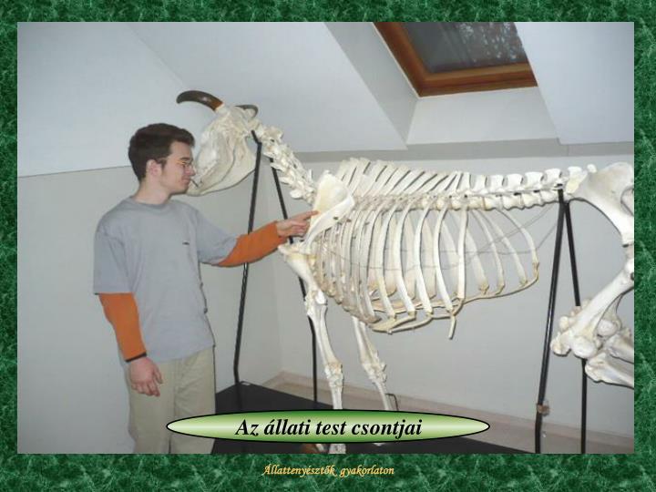 Az állati test csontjai
