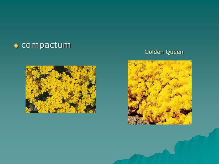 compactum