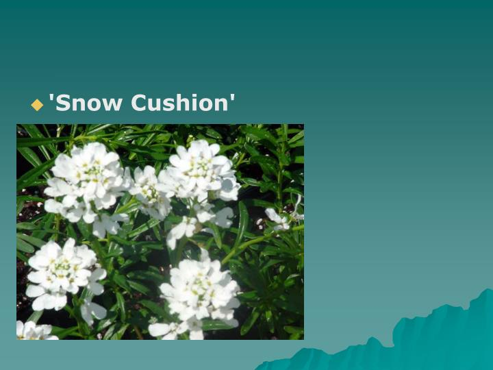 'Snow Cushion'