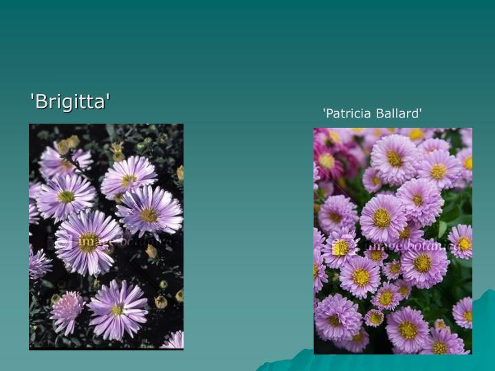 'Brigitta'