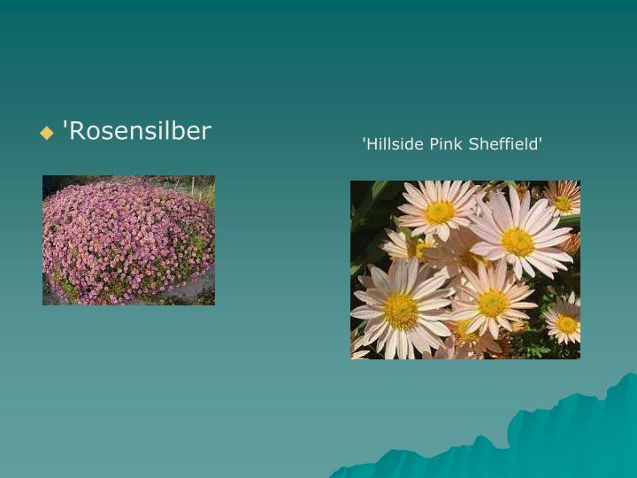 'Rosensilber