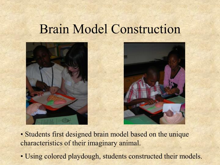 Brain Model Construction