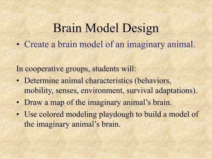 Brain Model Design
