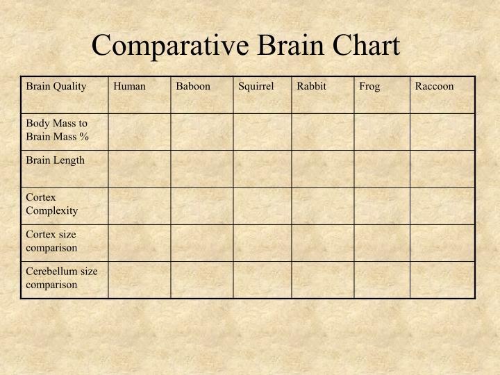Comparative Brain Chart