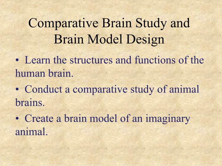 Comparative Brain Study and Brain Model Design