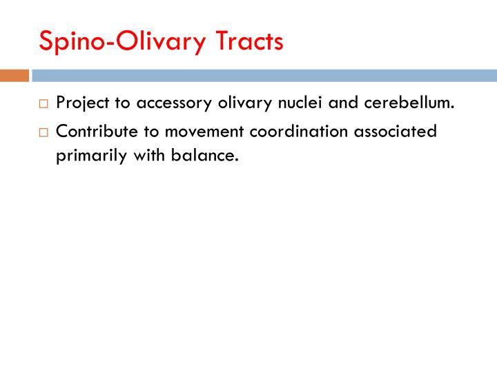 Spino-Olivary Tracts